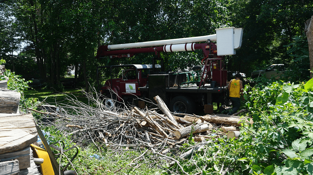 heavy equipment surrounded by chopped down trees