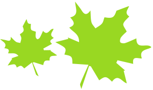 two neon green maple leaves