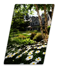 diagonal sliver with daisies in front and home in background