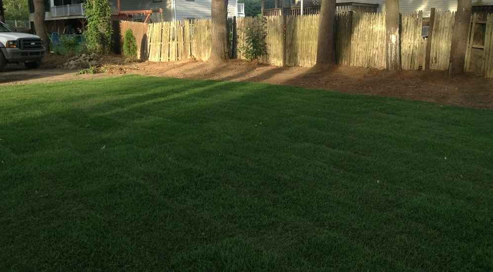 clean nicely landscaped yard and lawn